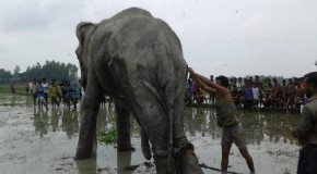 Two Rohingya refugees death by wild elephants in Cox's Bazar camp