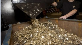 Royal Mint withdraws the old pound coin: £450 million lost overnight